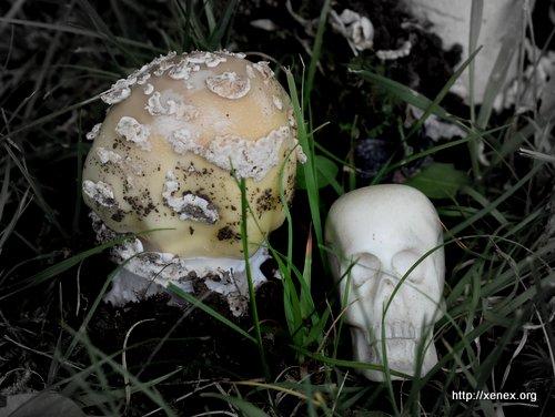Mushroom and skull